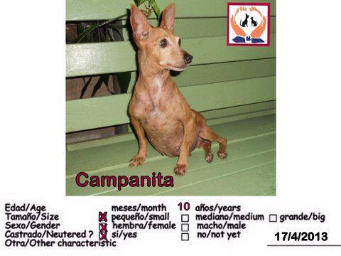 Campanita17April2013